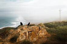 Black Crows On Coastal Cliff W...