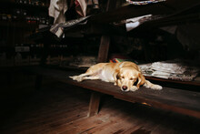 A Sleeping Dog In An Empty Vil...
