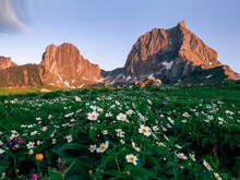 White Buttercup Meadow In Fron...
