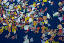 Leaves In A Lake 2
