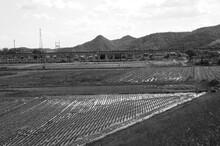 岡山市東区砂場地区の砂川左岸から、田園ごしにながめる新庄山と山陽新幹線の高架橋