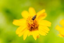 Detail Of Bee Sucking Nectar F...