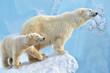 canvas print picture - polar bear cub