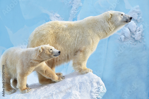 Papel de parede polar bear cub