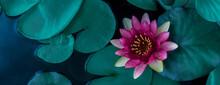 Beautiful Lotus Leaf Near The ...