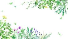 新緑のハーブガーデンのフレーム装飾。水彩イラスト。