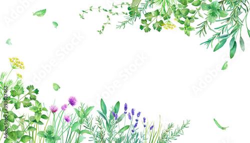 Fototapeta 新緑のハーブガーデンのフレーム装飾。水彩イラスト。 obraz