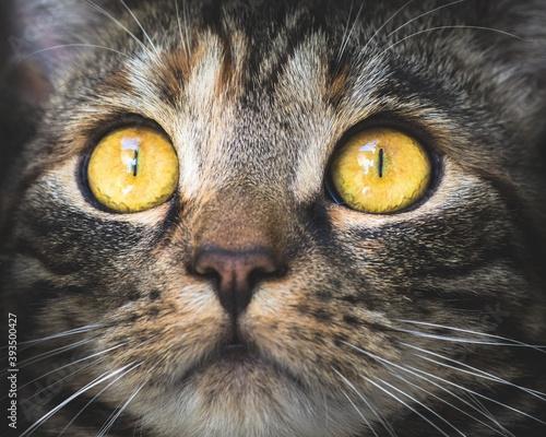 Vászonkép Ojos de gato