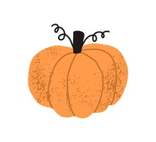 Round Squash Or Pumpkin With Brown Stem And Tendrils Isolated On White Background. Whole Orange Autumn Vegetable. Hand Drawn Colorful Textured Flat Vector Illustration