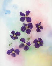 Purple Orchid Flowers Floating In Multi Coloured Water