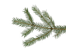 Branch Of Christmas Tree. Gree...