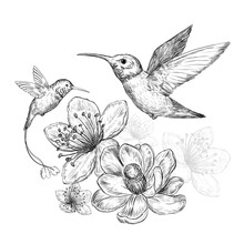 Sketch With Hummingbirds And Beautiful Flowers On A White Background