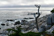 Pescadero Point - Pebble Beach, California