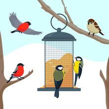 Bird Feeder On The Tree Branch And Birds.