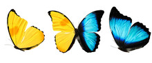 Three Butterflies With Blue Ye...