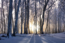 Forest In Winter With Frozen T...
