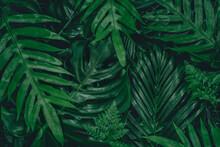 Monstera Green Leaves Or Monst...