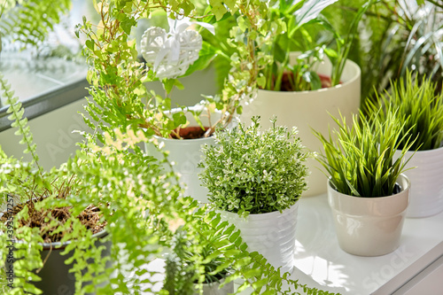 Fotografering nature, flora and gardening concept - green flowers and houseplants at home