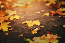 Dry Yellowed Leaves That Have ...