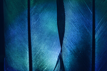 Bird feather neon multi colored light. Beautiful background pattern texture for design. Macro photography view.