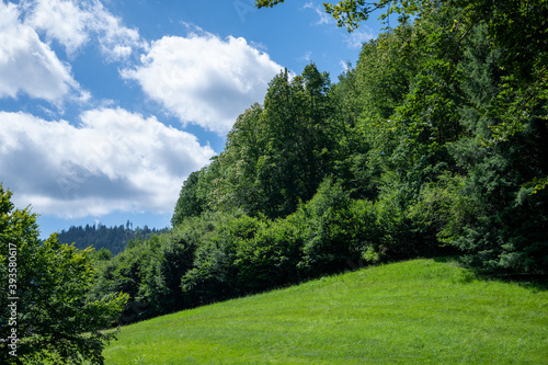 Fotografía summer weather with blue sky and lush green meadows hang directly from the whale