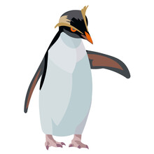 Figure Of A Standing Southern American Rockhopper Penguin