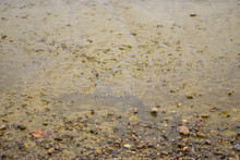 Background Texture Of Wet Sand...