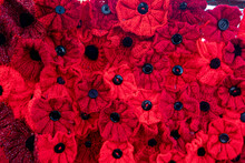 Knitted Poppies For Armistice Day For All Wars Remembrance