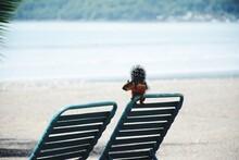 Squirrel On Deck Chair At Beach Against Sea