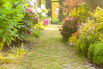 Piękny kwitnący ogród z kwiatami w słońcu