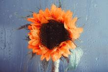 Orange Sunflower Behind Glass Window With Rain Drops