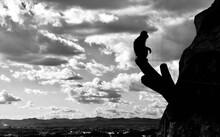 Silhouette Monkey Sitting On Wood Against Sky