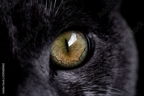 iris gato Tapéta, Fotótapéta
