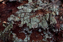 Green Moss With Mold On The Gr...