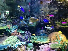 Colorful Fish And Coral Reef In Fish Tank