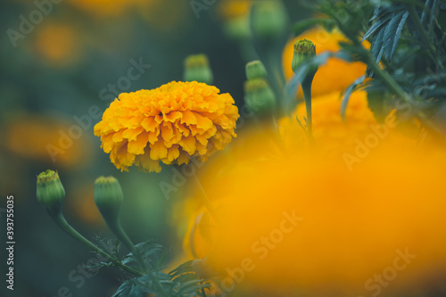 flower blur background Fototapet