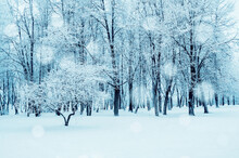 Winter Landscape, Winter Fores...