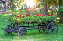 View Of Flowering Plants On Cart In Park