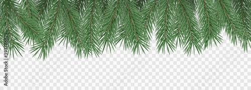 Fototapeta Fir branches on transparent background. Decorative christmas pattern or frame. Seamless vector illustration. obraz