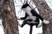Cat On Tree, Black And White C...
