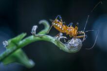 Closeup Wheel Bug