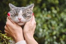 Woman Stroking A Cute Cat On T...