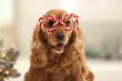 Adorable Cocker Spaniel dog in party glasses on blurred background, closeup