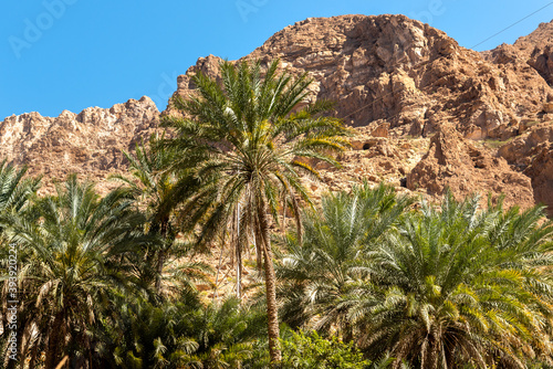 Landscape of Wadi Tiwi oasis with mountains and palm trees in Sultanate of Oman Fotobehang