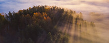 Spruce Trees Through The Morni...
