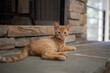 canvas print picture - orange cat and fireplace