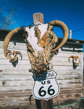 Low Angle View Of Road Sign On Wooden Pole With Animal Skull Against Sky