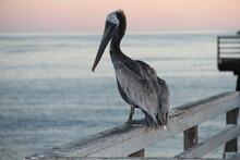 Reflecting Stork Overlooking T...