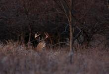 Deer Resting On Field