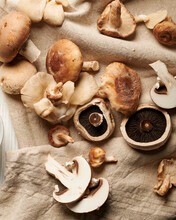 Various Types Of Mushrooms On ...